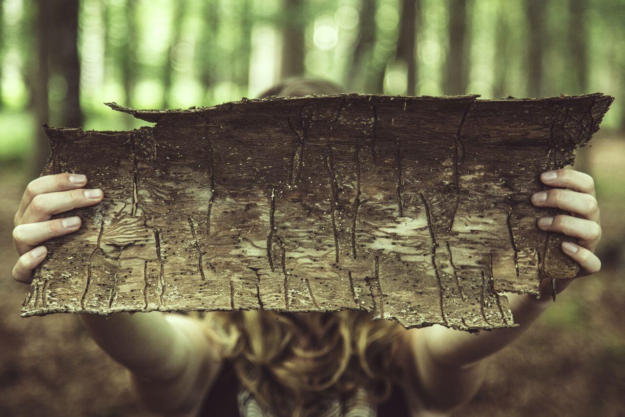 Cânepa și scoarța de stejar - o combinație minune